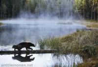 Wolverine – photo Antti Leinonen