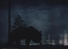 karhun yökävely